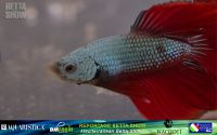 14_napoli_aquatica_betta
