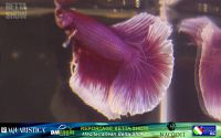 15_napoli_aquatica_betta