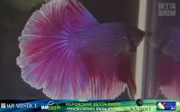 17_napoli_aquatica_betta