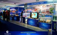 11businessFish